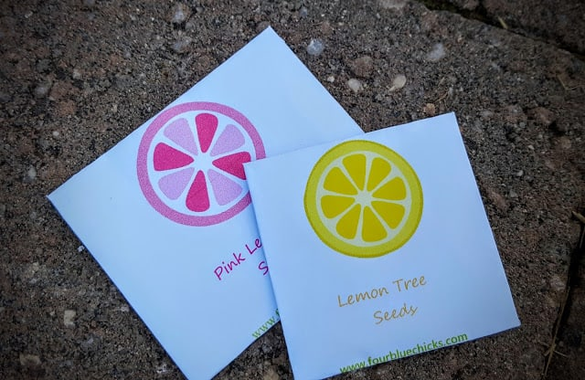 fruit for thought subscription box review