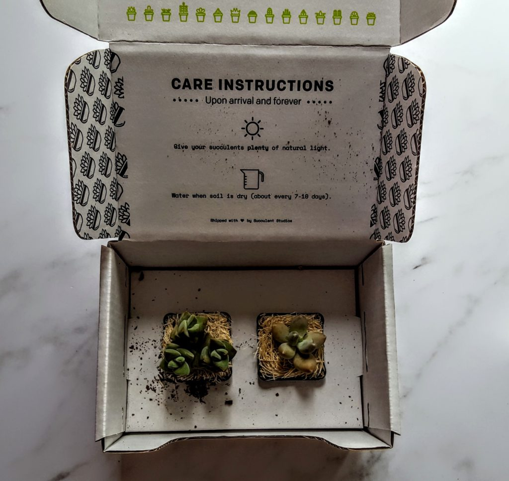 first look in the succulent studio box