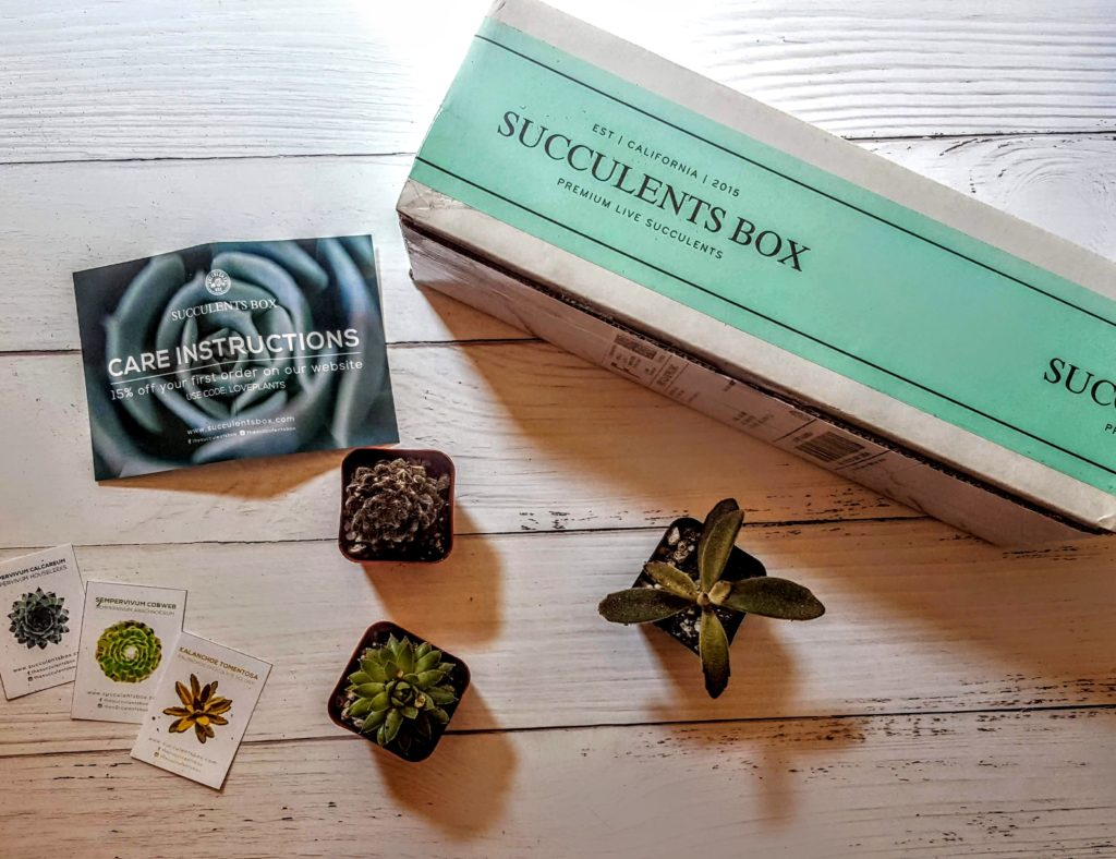 what's in the succulents box